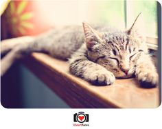 The 3rd place winner of iheartfaces' April 2011 Pet Week photo challenge.  What a cutie!