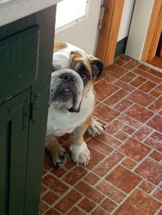 Nope, I'm not coming out till he says hes sorry for yelling at me for eating his shoe!!!