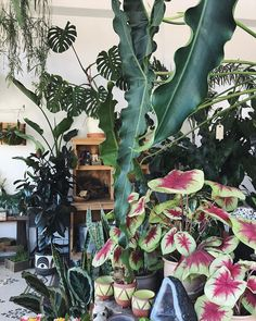 Learn how to choose and care for indoor plants, plus find seven ideas for gorgeous indoor garden displays. Green Plants, Tropical Plants, Potted Plants, Indoor Plants, Plantas Indoor, Florida Gardening, Plants Are Friends, Green Life, Dream Garden