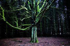 Marcin Łupkowski - prowincjonalny blog autorski z armagedonem w tle: Drzewo dające wieczność