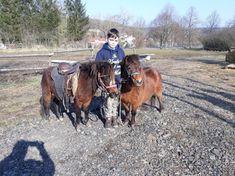 Prodám welsh pony - Domažlice, prodám