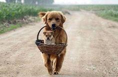 犬が教えてくれる「人生を豊かにする17の助言」:らばQ