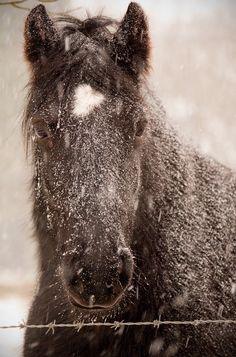 #winter #snow #horse
