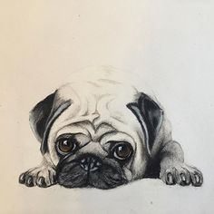 Animal Sketches, Art Drawings Sketches, Animal Drawings, Cute Drawings, Tatoo Pug, Arte Van Gogh, Dog Pop Art, Pugs And Kisses, Baby Pugs