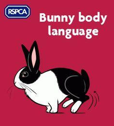 Rabbit behaviour: all about bunny body language