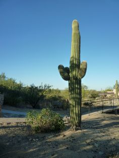 The Arizona desert harbors secrets as well as cacti in Peril by Ponytail, a Bad Hair Day Mystery by Nancy J. Cohen.