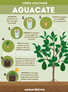 Eco Garden, Home Vegetable Garden, Dream Garden, Garden Plants, Wooden Greenhouses, Wine Country Gift Baskets, Flower Planters, Green Life, Plant Decor