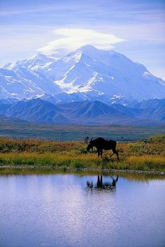 Denali National Park, Alaska. For just a short while this was also my backyard.