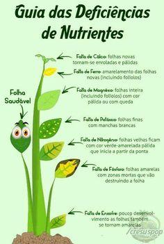 Árvores Sun Garden, Home Vegetable Garden, Tropical Garden, Garden Pots, Herb Garden, Indoor Garden, Growing Herbs, Growing Flowers, Plant Diseases