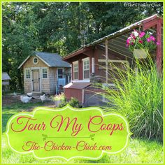 The Chicken Chick ~ Virtual Tour de Coop