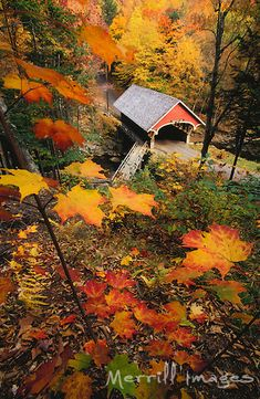 New Hampshire, covered bridge and fall foliage