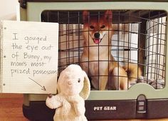 100 Best Dog Shaming Moments - look at that face!
