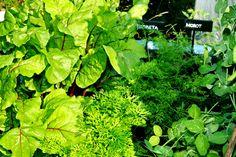 Ätbar blast från grönsaker!