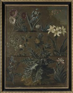 English School, 18th Century   Botanical studies of Hyacinthus, Gasteria, Mertensia, Capparis, Scolymus, Iris and other plants growing on a terraced mound oil on canvas  36 3/8 x 28 in. (92.4 x 71.2 cm.)