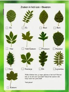 Juf Shanna: Werkbladen herfst - Zoeken in het bos