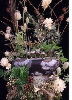 Alexander McQueen wild Wild Poppies, Alexander Mcqueen, Plants, Plant, Planting, Planets