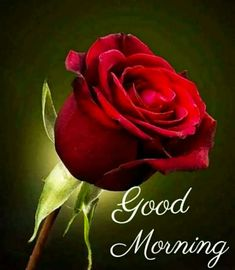 Good Morning Images For Whatsapp Good Morning Wishes Love, Good Morning Flowers Quotes, Good Morning Rose Images, Good Morning Friends Images, Good Morning Beautiful Pictures, Good Morning Happy Sunday, Good Morning Roses, Good Morning Photos, Good Morning Gif