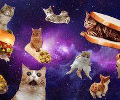 galaxycats.idk.