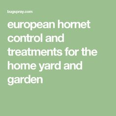 european hornet control and treatments for the home yard and garden