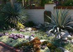 image result for cactus garden ideas