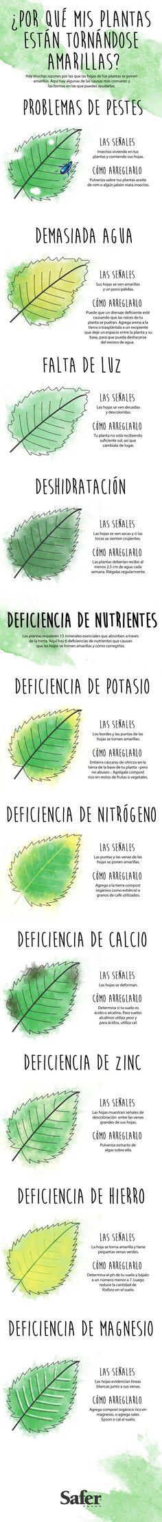 Todo lo que necesitas para saber cómo mejorar la salud de tus plantas amarillentas.