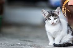 https://flic.kr/p/wtVXyD | Anafi Cat | This cute little kitten wanted its picture taken!