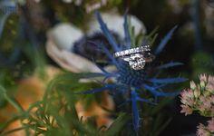 Ring+Shot+Wedding+at+Farm+at+Dover+Wisconsin+Wedding