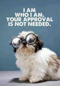 remember this, self confidence, thought, inspirational quotes, funny quotes, puppi, shih tzu, dog, true stories