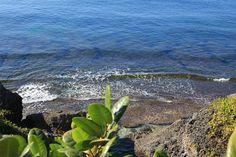 小琉球為珊瑚礁島,擁有清澈的海水,豐富的海洋生態。珊瑚礁海域只佔海洋面積的千分之三,以單位面積計算,是海洋生產力最高的,生物最多樣性,生物量最多樣的生態系。珊瑚礁又被稱做海洋的熱帶雨林。