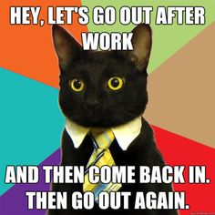 Caboodle: Business cat, best new cat meme | Catster