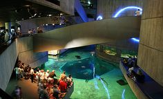 The National Aquarium in Baltimore is a 15 minute drive from Washington D.C. and one of the areas premier attractions.  The aquarium homes an extensive number of aquatic wildlife and species.