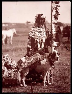 Arikara Woman with dog travois.Traditionally an Arikara family owned 30–40 dogs. The people used them for hunting and as sentries, but most importantly for transportation, before Plains tribes adopted the horse. Many of the Plains tribes had shared the use of the travois, a transportation device to be pulled by dogs. It consisted of two long poles attached by a harness at the dog's shoulders, with the butt ends dragging behind the animal; midway, a ladder-like frame of hide strips was…