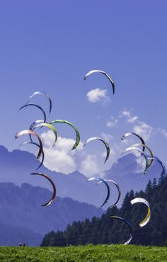 A flock of LEI (Leading Edge Inflatable) surfing kites. Perhaps the start of a race - one of the competitive aspects of the sport besides free-style stunts and other categories. T.P. (my-best-kite.com)