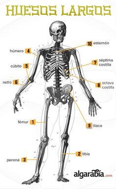 Trendy Medical Infographic Tips Ideas – abdomen Medicine Notes, Medicine Student, Human Anatomy And Physiology, Medical Anatomy, Anatomy Study, Medical Terminology, Med Student, Med School, Forensics