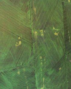 Reeds   Handmade Wallpaper, Serigraphe   Fromental | Wallcovering |  Pinterest | Handmade Wallpaper And Wallpaper