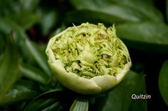 pivoine-ao Chou Romanesco, Artichoke, Vegetables, Food, Peony, Artichokes, Essen, Vegetable Recipes, Meals