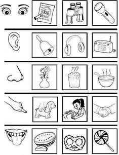 Five Senses Preschool, 5 Senses Activities, My Five Senses, Body Preschool, Preschool Learning Activities, Science Worksheets, Kindergarten Worksheets, Childhood Education, Kids Education