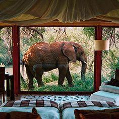 8 Hotels Where Wild