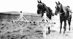 WW 1 -1st Light Horse- graves of last of the regiment killed in Middle East.