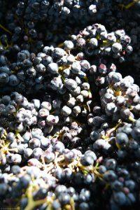 Vinicola Urbana - Elaboración de Vinos — Vinicola Urbana