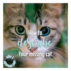 Without looking at your cat, can you say what colour eyes he has? read this article for more info. Lost Cat Poster, Missing Cat Poster, Cat Posters, Abyssinian, Feral Cats, Cat Colors, White Cats, Domestic Cat, Describe Yourself