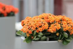 10 «Βολικά» Φυτά που δεν χρειάζονται πολύ νερό για να επιβιώσουν! - Toftiaxa.gr Kalanchoe Blossfeldiana, Interior Design Plants, Plant Design, Colorful Plants, Unique Plants, Indoor Orchids, Indoor Plants, Gerbera Plant, Gardening