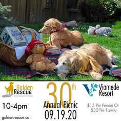 Golden Anniversary, 30th Anniversary, Golden Events, Silent Auction, Rainbow Bridge, Golden Dog, Four Legged, Rescue Dogs, Fundraising