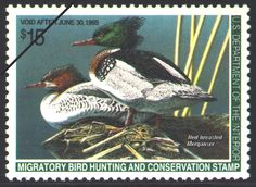 1994 Red-breasted Mergansers