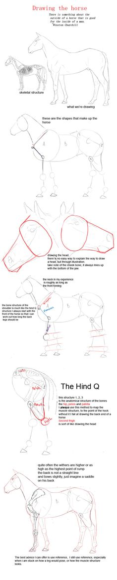 drawing a horse by YOB.deviantart.com on @deviantART