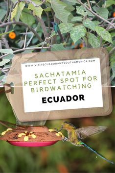 Sachatamia Lodge, boasting over 320 species is an idyllic place to enjoy some of the diversity in Ecuador. Best Travel Sites, Spanish Speaking Countries, South America, Latin America, Travel Dating, Sustainable Tourism, Just Dream, Galapagos Islands, Picnic Area