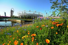 London created acres and acres of wildflower fields in London for the 2012 Olympics, planted carefully 77 days before the opening ceremonies to bloom just in time. Photo via The Daily Mail