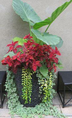 Plantes pour ombre, mi-ombre en contenant.