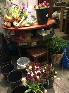 My Flower, Flowers, Planter Pots, Royal Icing Flowers, Flower, Florals, Floral, Blossoms
