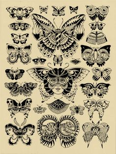butterfly & moth concepts.